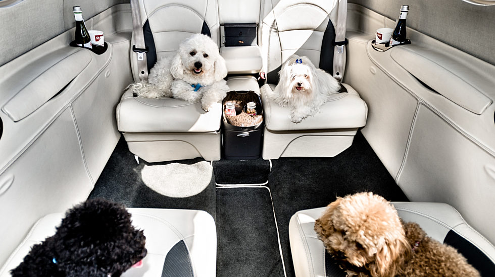 Four pets on board