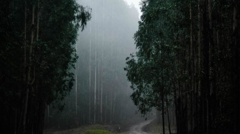 Rain forest we are planet a